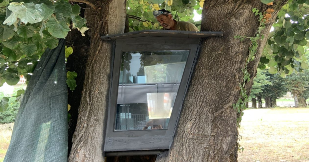 árvore-biblioteca